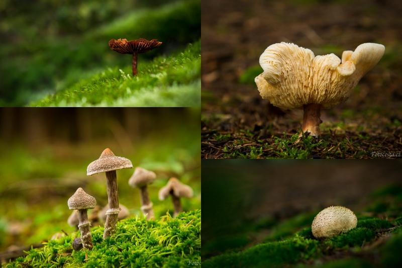 Jak fotit houby.