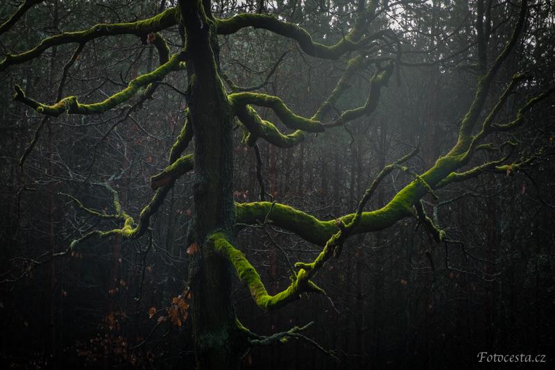 Mechem obrostlý strom.