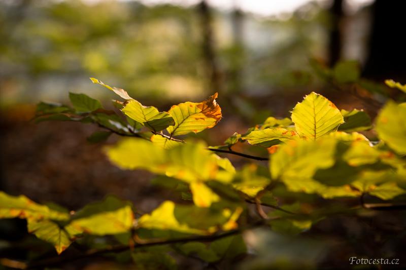 Listy stromů.