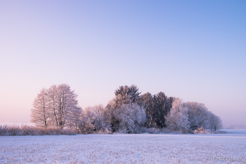 Stromy na poli během zimního rána.