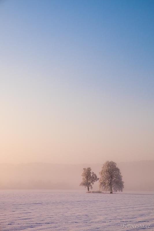 Stromy na zasněženém poli.