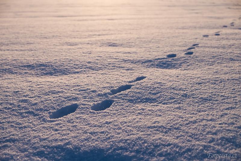 Stopy ve sněhu.