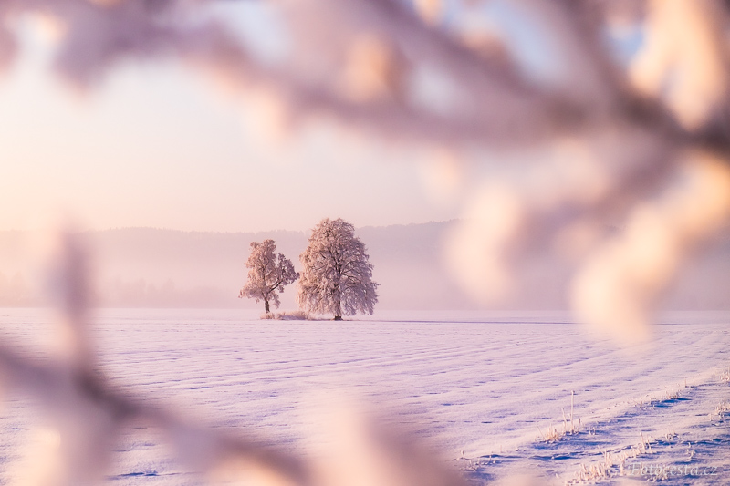 Průhled skrz zamrzlé větve stromu.
