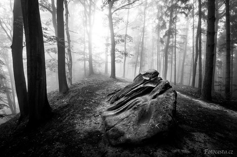 Mlha v lese.