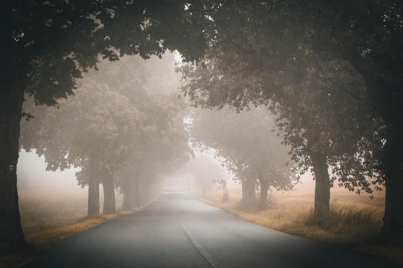 Mlha na silnici.
