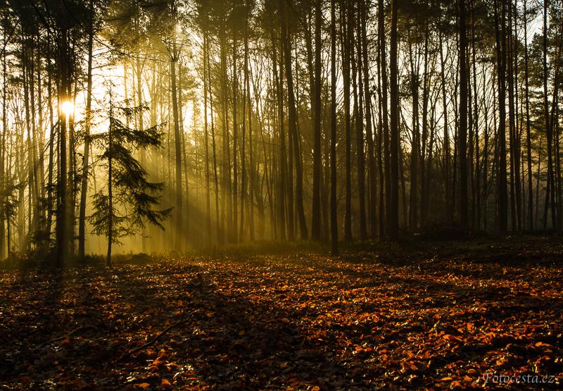 Ranní slunce prosvítající skrz stromy.