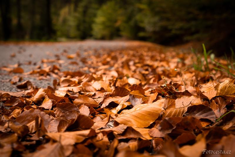 Podzimní listy.