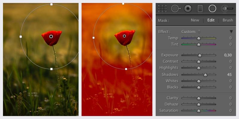 Jak fotit červené květiny – Radial Filter Lightroom.
