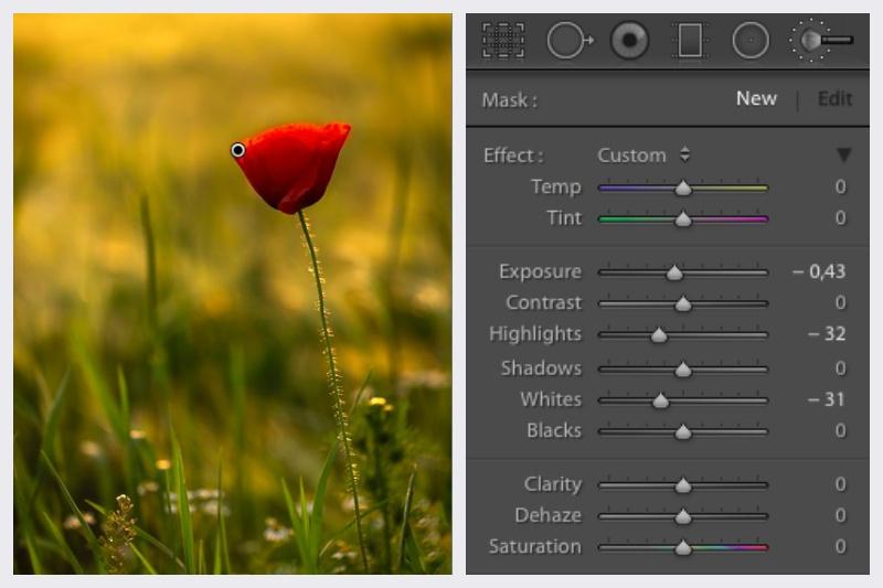 Jak fotit červené květiny – Adjustment Brush Lightroom.