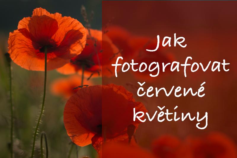 Jak fotit červené květiny.
