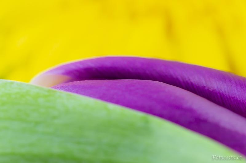 Detail květin.