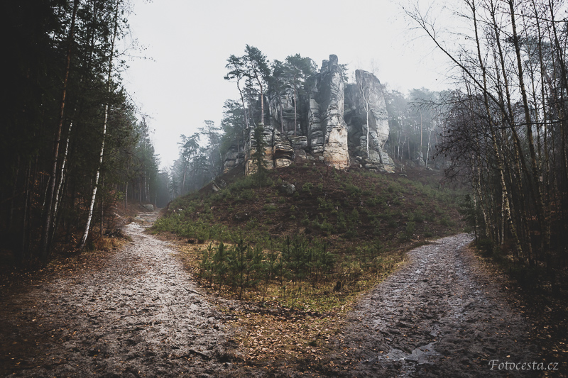 Mlžný les.