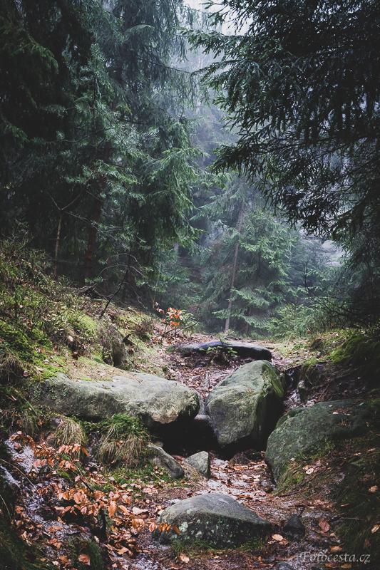 Lesní zákoutí.