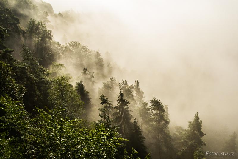 Stromy zahalené v mlze.