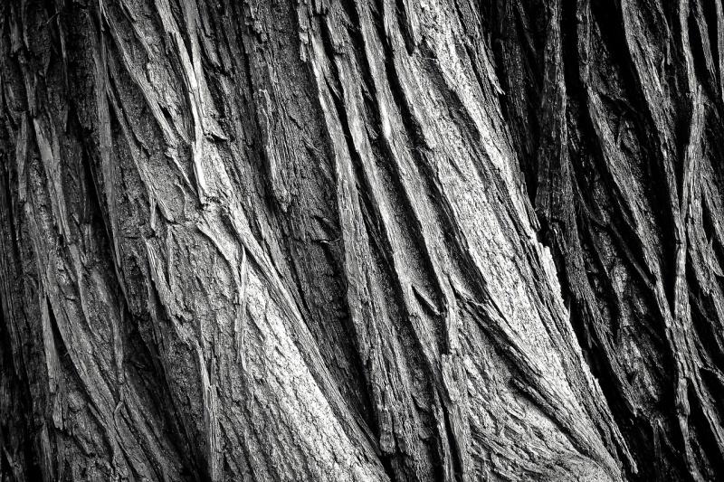 Textura kůry stromů.