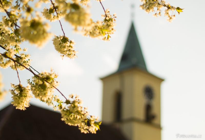 Všeňský kostel s třešňovými květy.